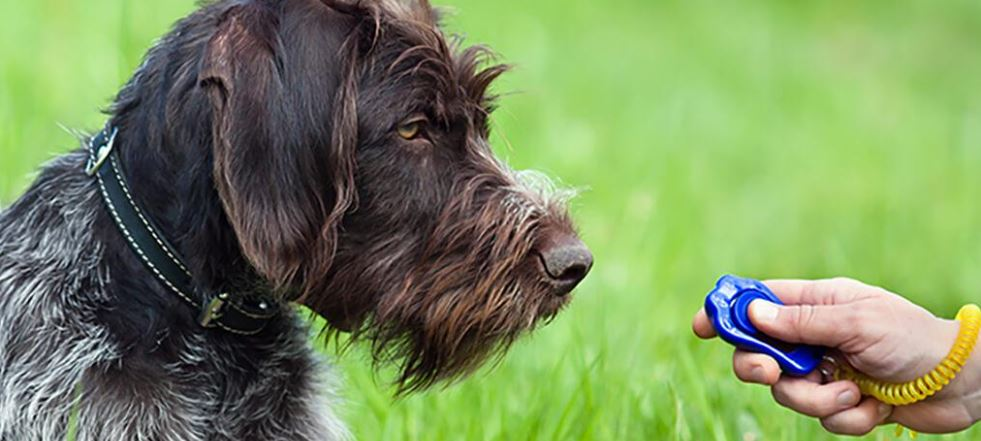 Een gids voor clickertraining van uw hond