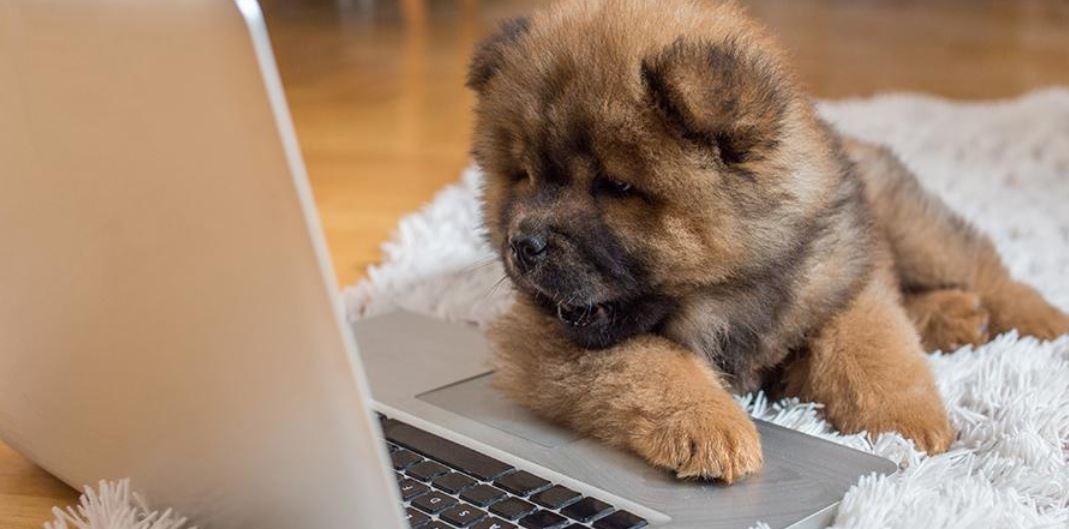 tips van experts voor het opvoeden van een puppy terwijl je werkt